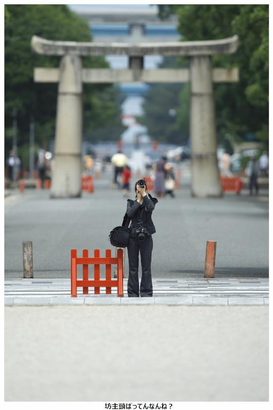 紫陽花-箱崎宮-10.jpg