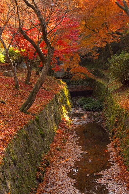 京都の紅葉 134.jpg