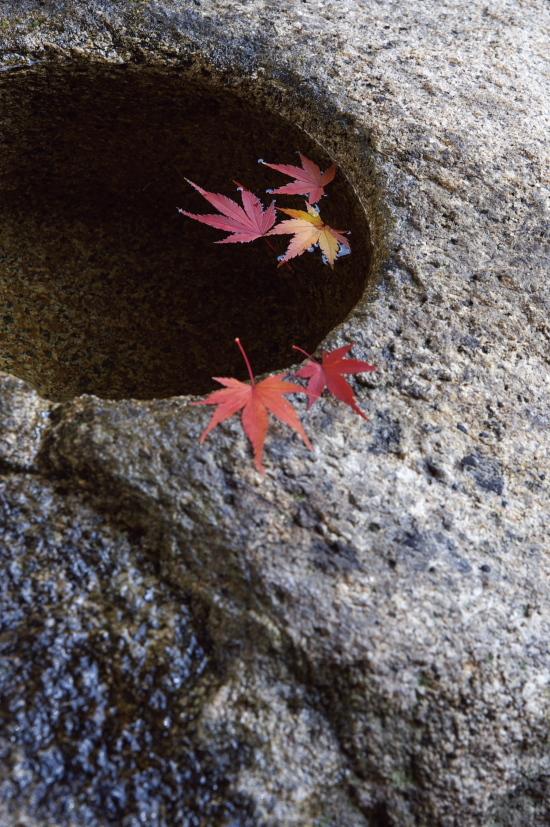 京都の紅葉 180.jpg