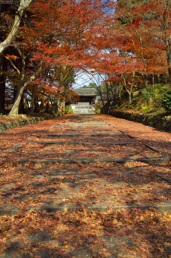 京都の紅葉 186.jpg