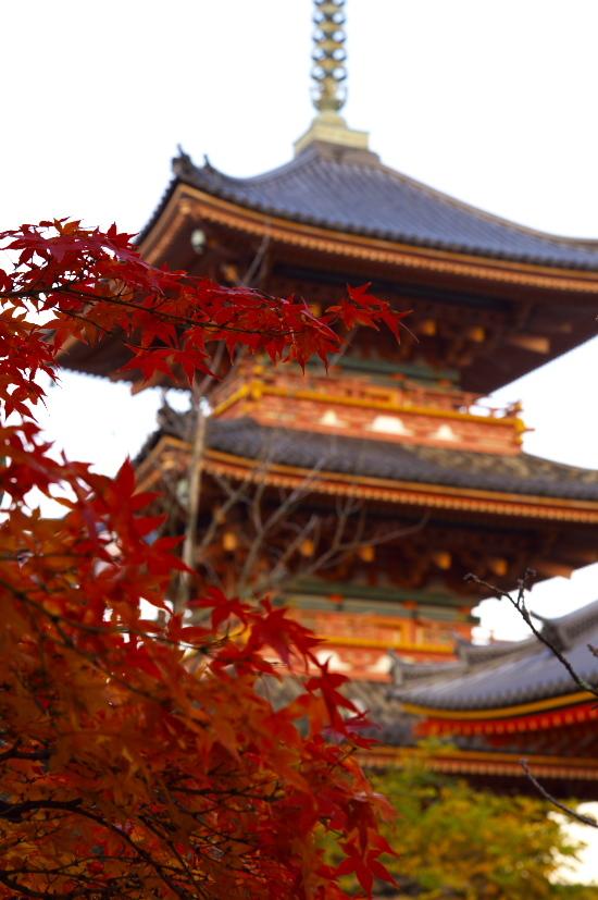 京都の紅葉 018.jpg