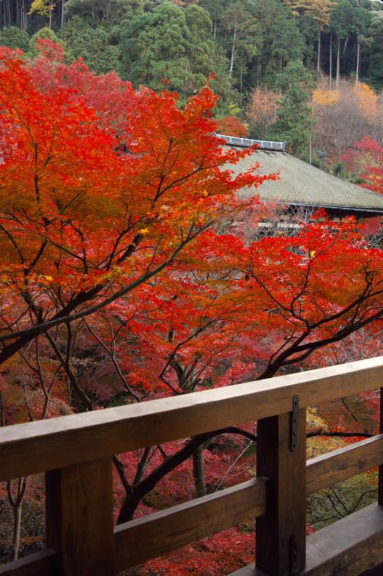 京都の紅葉 036.jpg
