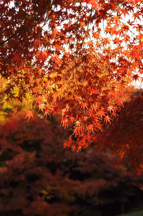京都の紅葉 082.jpg
