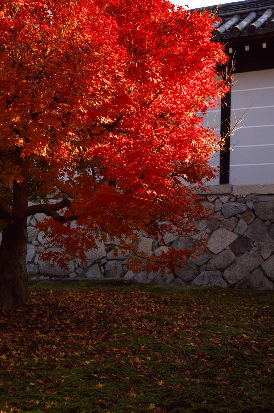 京都の紅葉 104.jpg