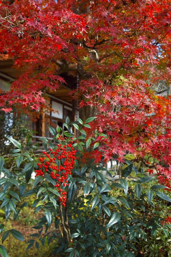 京都の紅葉 189.jpg